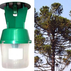 Pheromone Trap for Pine Processionary Moth
