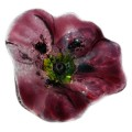Glass decorative poppy - Purple
