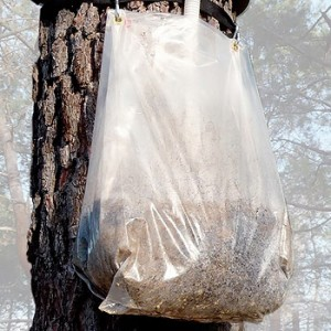 Replacement bag and sealant for eco-traps