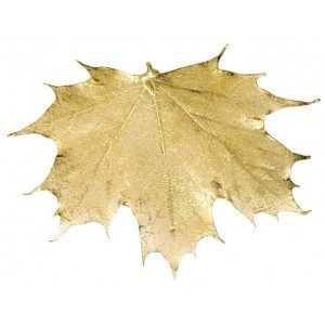 Sugar Maple - 24 karat Gold
