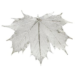 Sugar Maple - Silver